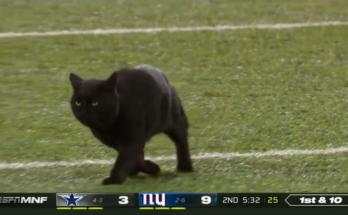 New York Giants Monday Night Football Cat`