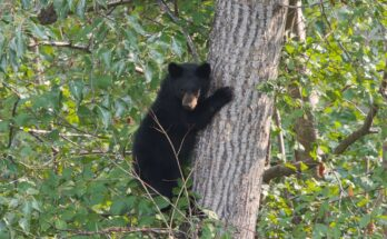 chicago bears baby