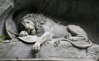 sad lion sorry for your loss