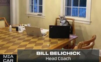 New England Patriots Fluffy Belichick